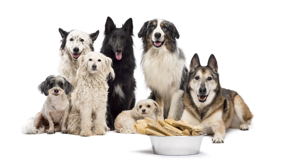 Hundfoder