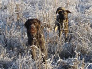Hund-frost