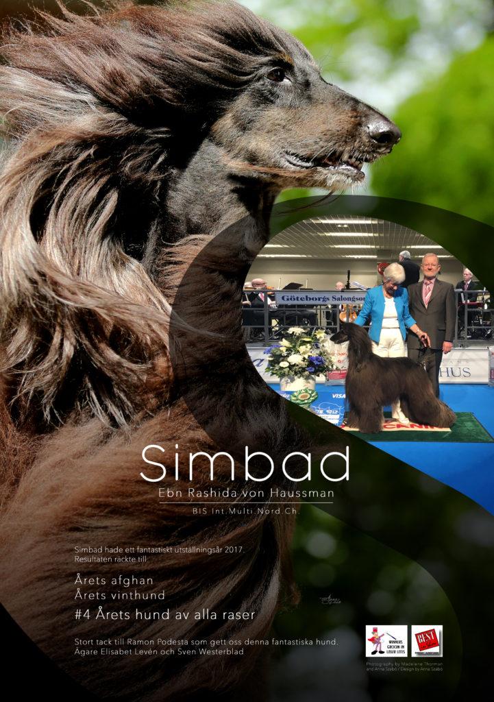 Simbad ad afghanklubben och vinthunden 2018